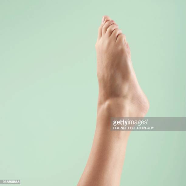 woman's foot and ankle - piedi foto e immagini stock