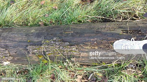 Womans Foot On Log