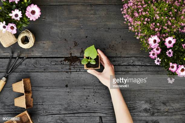 woman's hand hold seedling - potting stock pictures, royalty-free photos & images