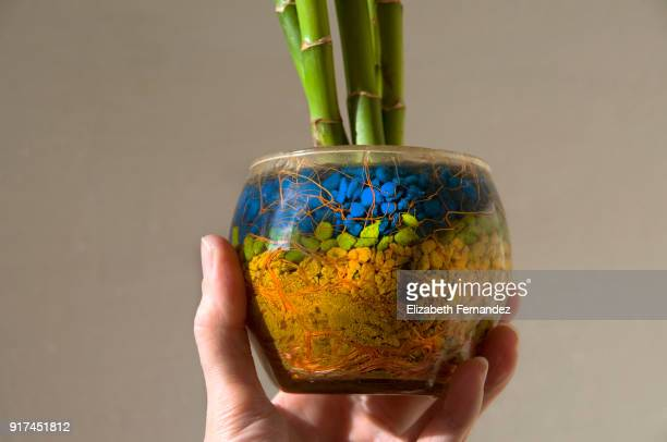 Woman's hand holding a bamboo plant in a glass flowerpot