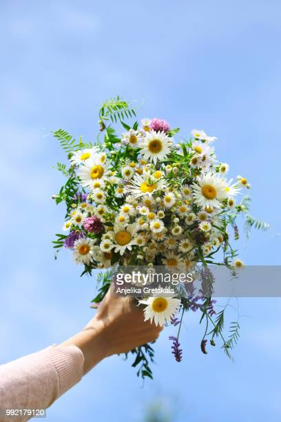 woman's hand holding a bouquet of wildflowers against blue sky background - bunch stock pictures, royalty-free photos & images