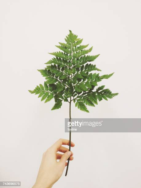 womans hand holding a branch - branch plant part stock pictures, royalty-free photos & images