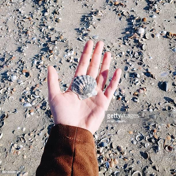 Woman's hand holding a seashell at the beach, Constanta, Romania