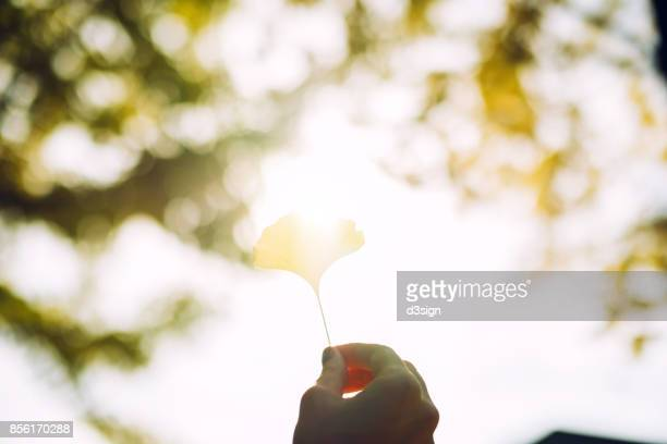 Woman's hand holding a yellow gingko leaf towards the sunlight