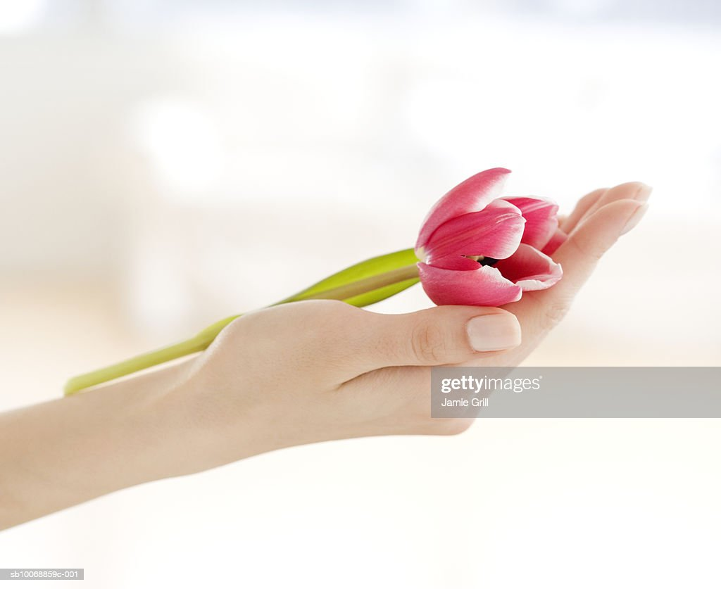 Woman's hand holding flower, close-up : Stock Photo