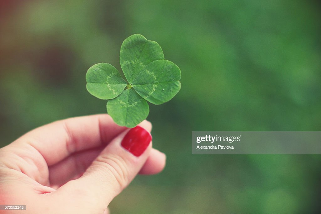 Woman's hand holding four leaf clover : ストックフォト