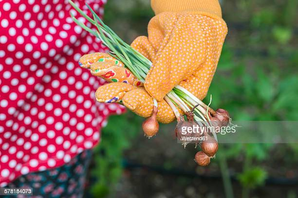 Womans hand holding plant bulbs in a garden