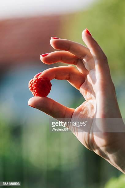 Womans hand holding raspberry