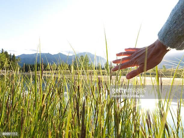 Woman's hand strokes grasses at edge of mtn lake