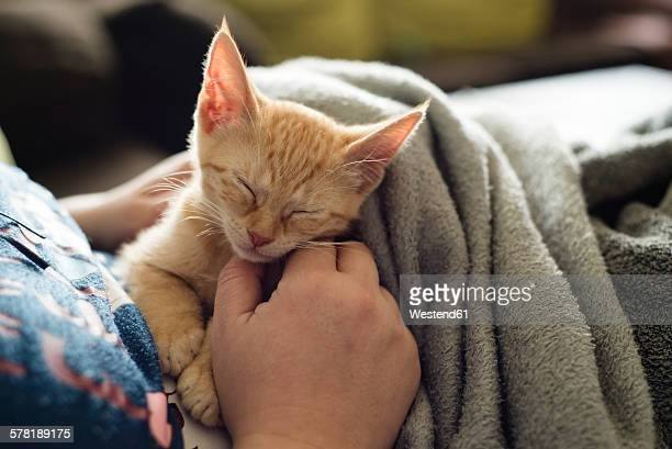 Womans hand stroking tabby kitten
