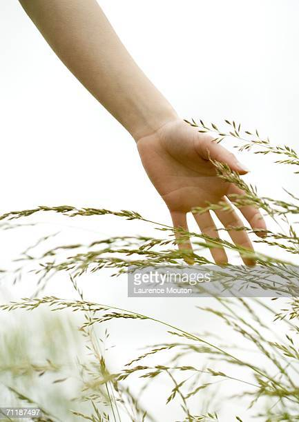 Woman's hand touching grass