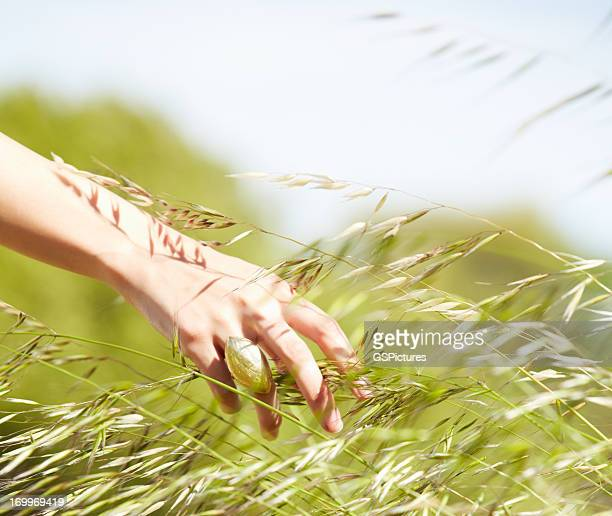 Woman's hand touching plant in nature