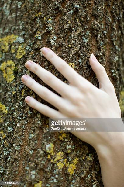 Woman's hand touching tree bark, cropped