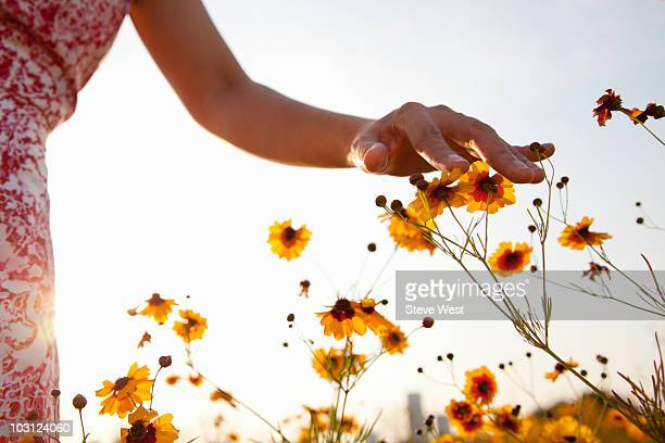woman's hand touching wild flowers in meadow - berühren stock-fotos und bilder