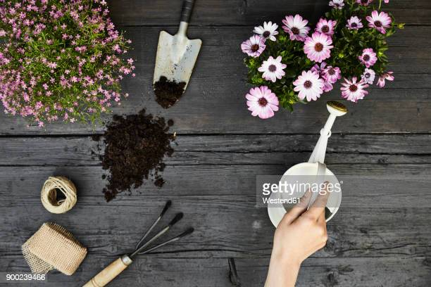 Womans hand watering flowers