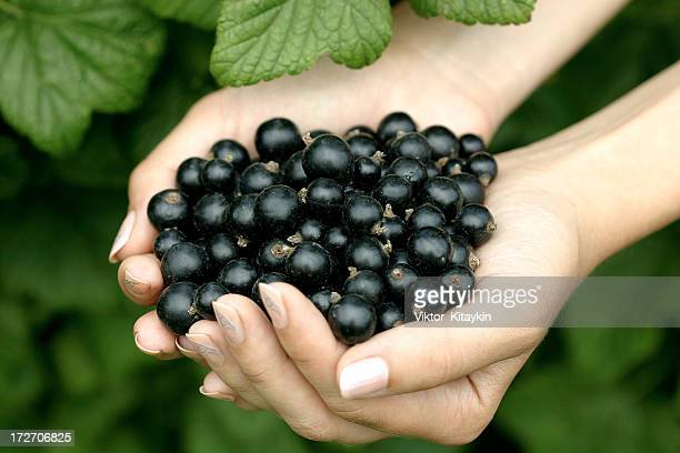 A woman's hands holding black currants