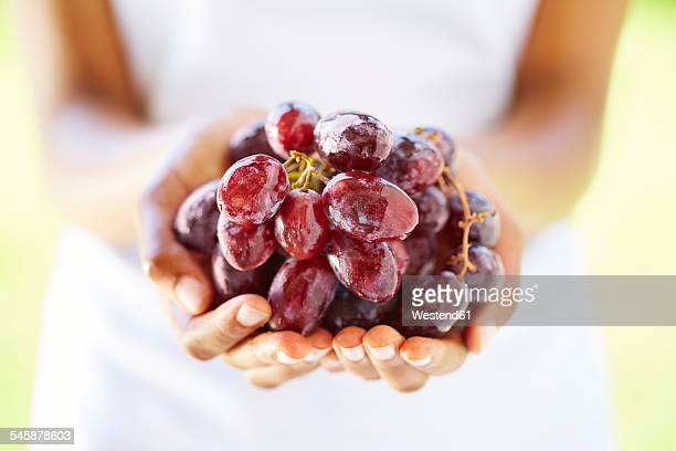 woman's hands holding red grapes - red grape stock photos and pictures
