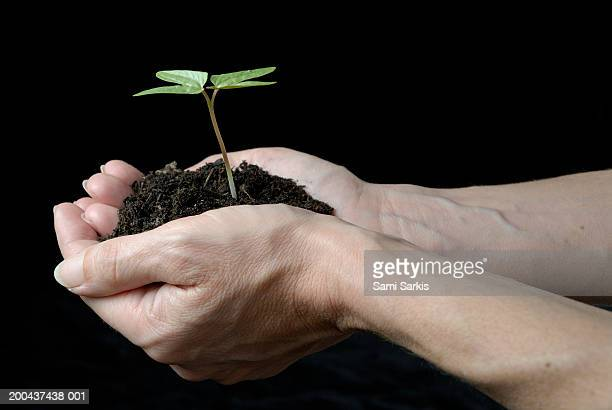 Woman's hands holding seedling, close up, side view