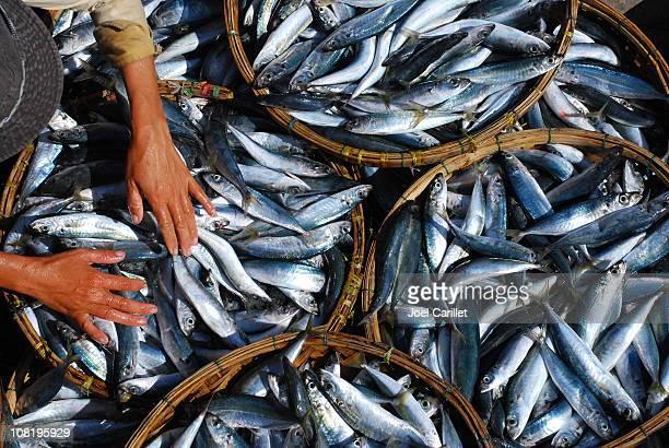Mulher mãos nos cestos de peixe de Hoi An, Vietname