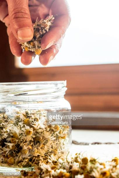 woman's hands putting dried camomile flowers in a jar - chamomile tea stock photos and pictures
