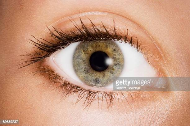 woman's hazel eye - hazel eyes stock pictures, royalty-free photos & images