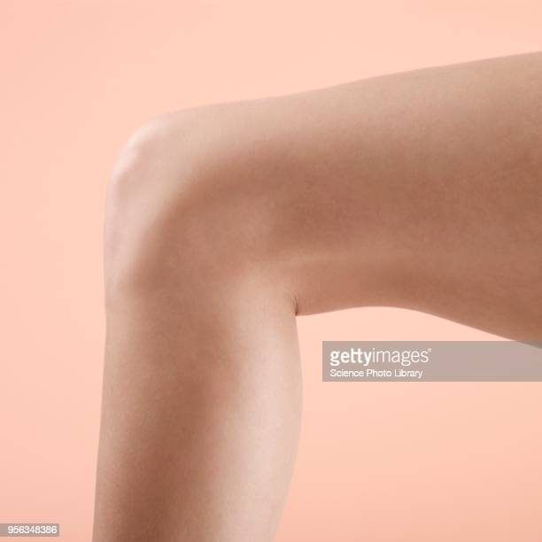 womans leg and knee - leg stock pictures, royalty-free photos & images