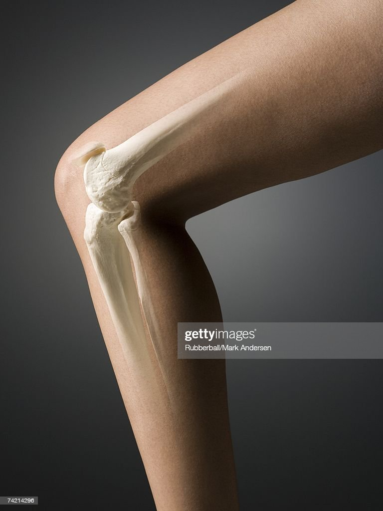 Woman's leg with knee and leg bones visible : Stock Photo