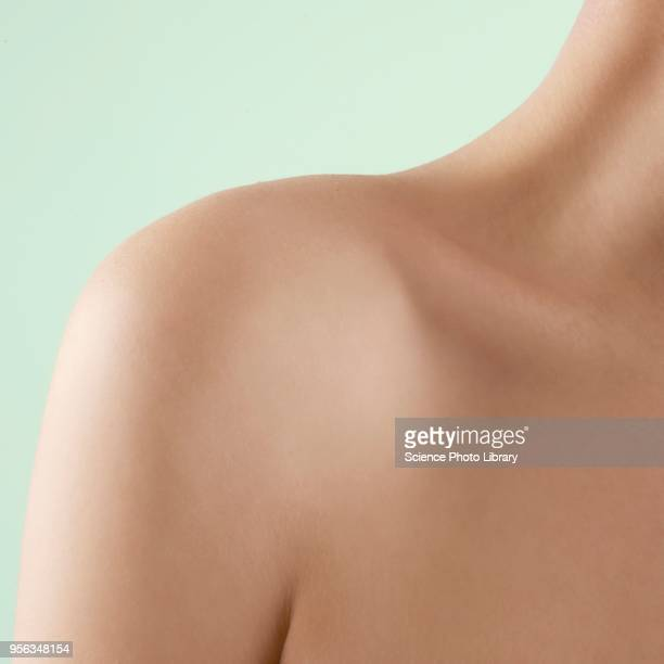 womans shoulder - parte del corpo umano foto e immagini stock