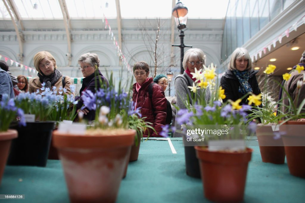 Women admire the plants on display at the RHS Great London Plant Fair on March 26, 2013 in London, England. The fair takes place in the RHS Horticultural Halls on March 26-27, 2013 and features numerous botanical displays, advice from the RHS, Alpine Garden Society stalls and the results of the 'Early Daffodil and Hyacinth Competition'.