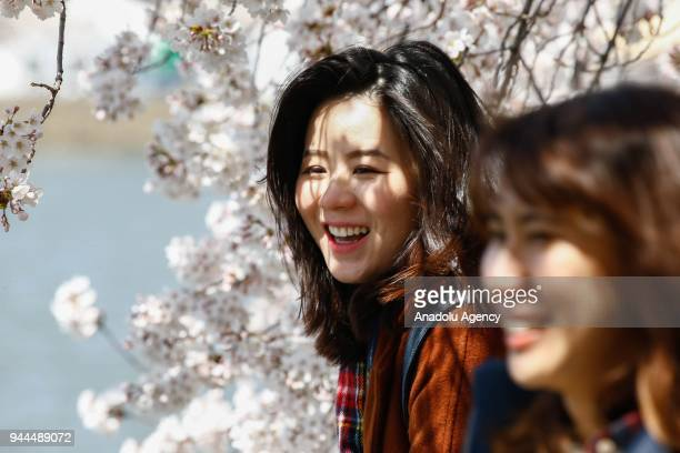 Women are seen with the blooming cherry trees which were sent from Tokyo after it was selected as 'town twinning' in 1912 along the Tidal Basin ahead...