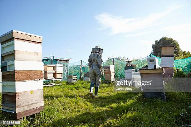 Women beekeepers working on city allotment