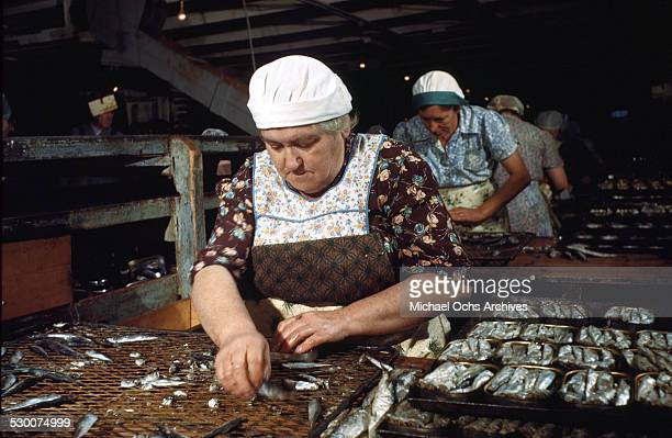 Women cannery workers work hard in the local sardine cannery in Lubec Maine