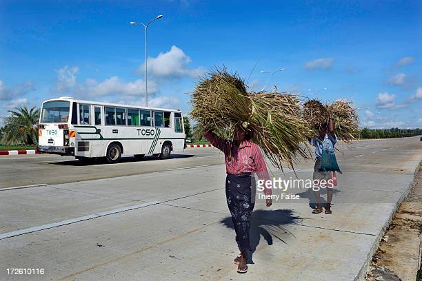 Women carry grass for cattle on a deserted Naypyidaw avenue