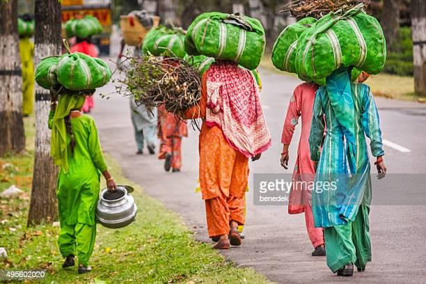 Women Carry Tea Leaves Palampur Himachal Pradesh India