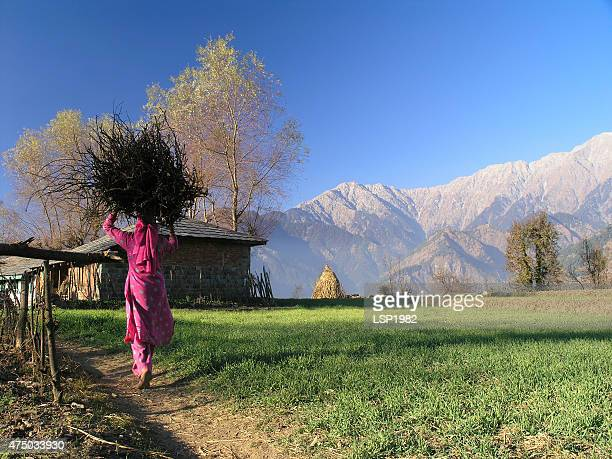 women carry woods on her head in india. - foothills stock pictures, royalty-free photos & images