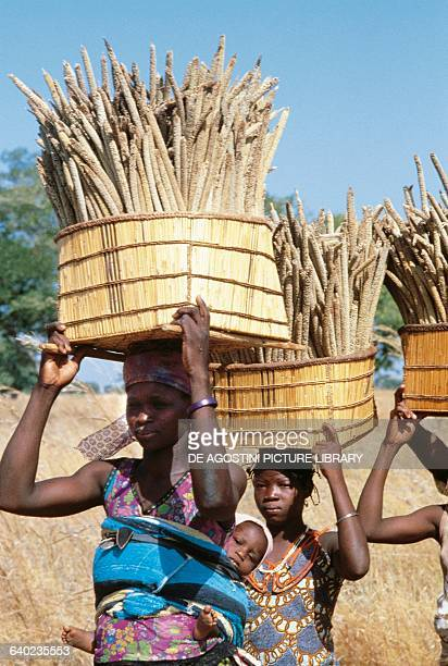 Women carrying baskets of corn millet Maroua area Cameroon