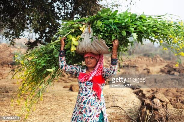 Las mujeres llevan mostaza cultivos bulto en la cabeza