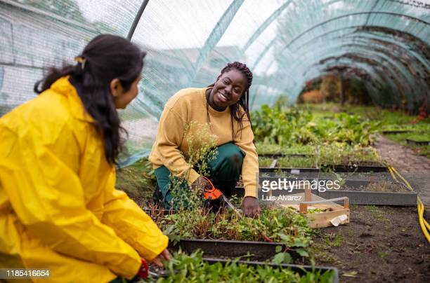 women chatting while working in greenhouse - sustainability stock pictures, royalty-free photos & images