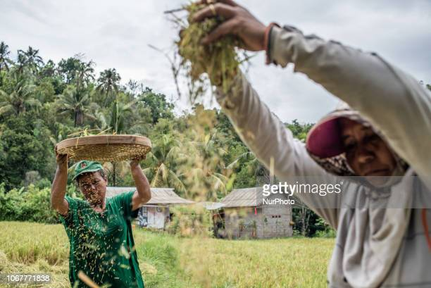 Women cleans paddy grains at a village in Buleleng Regency Bali Indonesia on December 2 2018