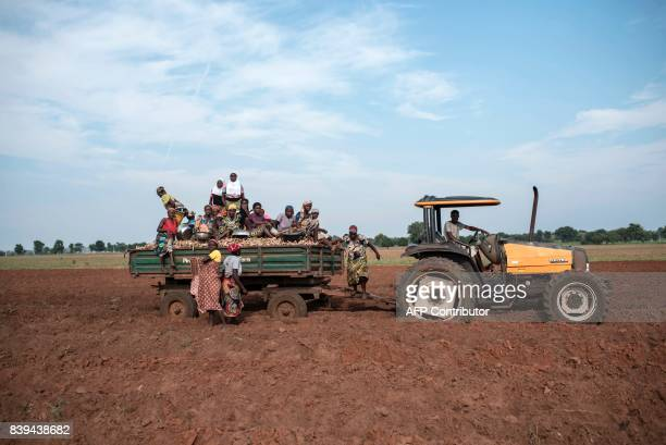 Women climb off a tractor drawn trailer filled with cassava cuttings prepared for planting on July 12 2017 Farming in Nigeria is not for the...