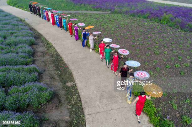 Women dressed in cheongsams perform at a lavender manor to celebrate the Mother's Day on May 13 2018 in Taizhou Jiangsu Province of China