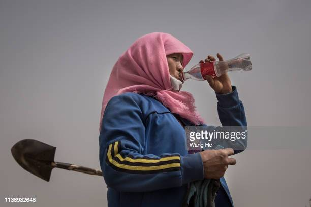 A women drinks water after planting saxaul in the desert at Mingqin county on March 27th 2019 in Wuwei Gansu Province China In order to prevent...