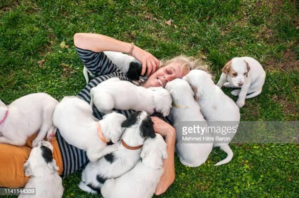 donne che si divertono con i suoi cuccioli dalmati - allevamento foto e immagini stock