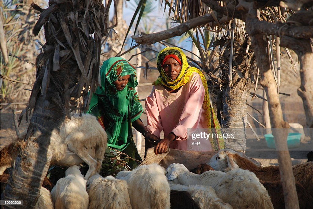 Women from the Eritrean Red Sea village of Hirgigo feed on