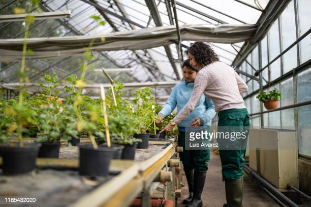 women gardeners examining plants at garden center - botanist stock pictures, royalty-free photos & images