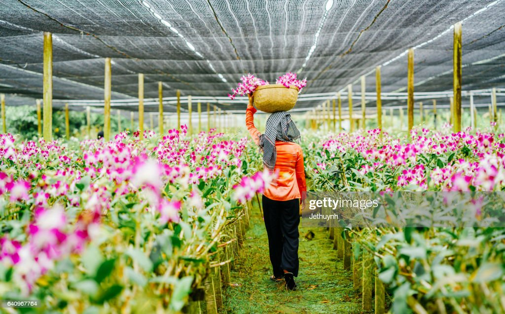 Women Gather Flowers In Orchid Garden