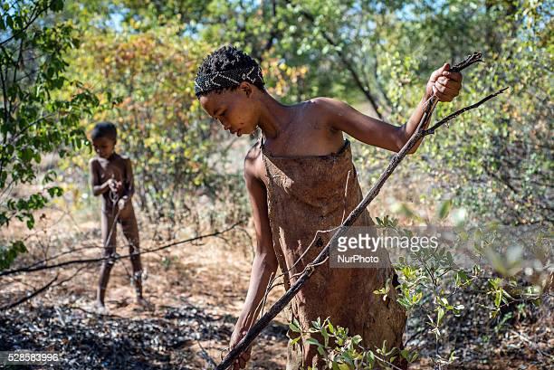 Women gathering firewood in the Living Museum of the JuHoansiSan Grashoek Namibia