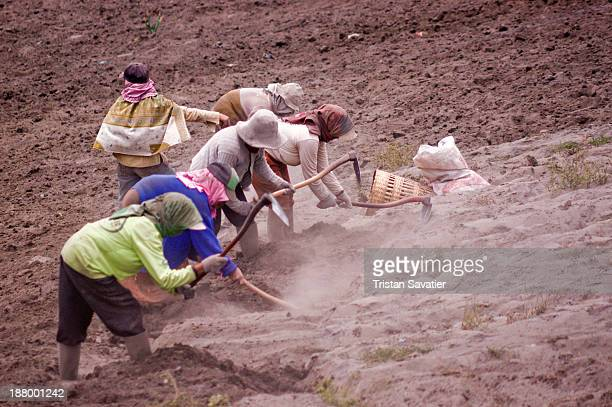 CONTENT] Women hand plowing a field covered with volcanic ash in Cemoro Lawang near Bromo Volcano The cost of labour is very low and a lot of the...