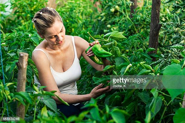 Women harvested vegetables in greenhouse - organic food production
