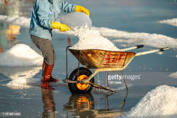 手押し車でベトナムで塩を収穫する女性たち - ソルトポンド ストックフォトと画像
